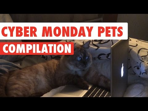 Cyber Monday Pets Compilation 2016