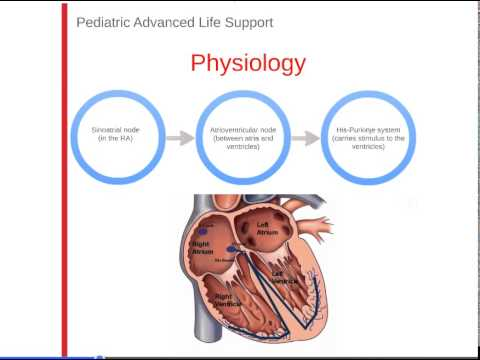 4. PALS: Normal Heart Anatomy & Physiology - YouTube