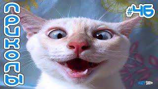 ЛУЧШИЕ ПРИКОЛЫ С КОТАМИ 2020 Смешные коты и кошки 2020 Угарные приколы с животными #46