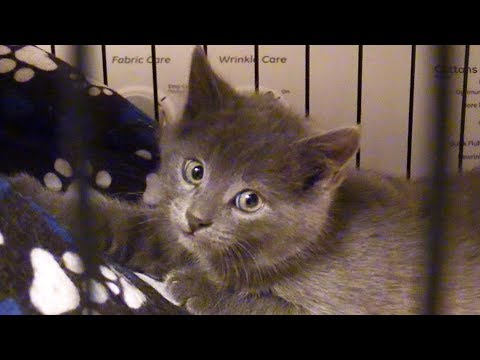 Cute Kitten Rescued from Freezing Cold