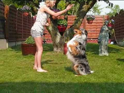 Dog dancing oberythmée / Australian Shepherd