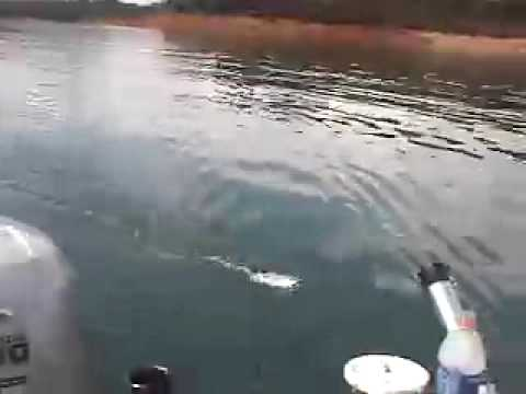 Trout Fishing Secrets At Lake Shasta Lure And Newly Invented