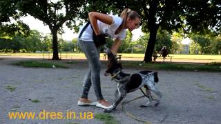 Как правильно играть с собакой - пример занятие по дрессировке