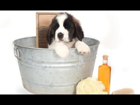 Curso CPT Banho e Tosa em Cães e Gatos - Infraestrutura, Banhos e Tosa Higiênica