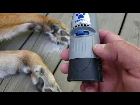 Using an Electric Grinder or Dremel Tool on your German Shepherd Dog's Nails