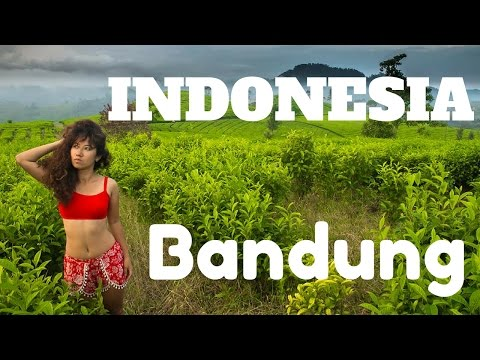 TEA PLANTATIONS, HOT SPRINGS & SURREAL CRATER LAKE, Bandung, Java, Indonesia