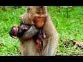 Young Mom Give Birth New Baby Hug On Chest Very Take Care Her Baby So Much.