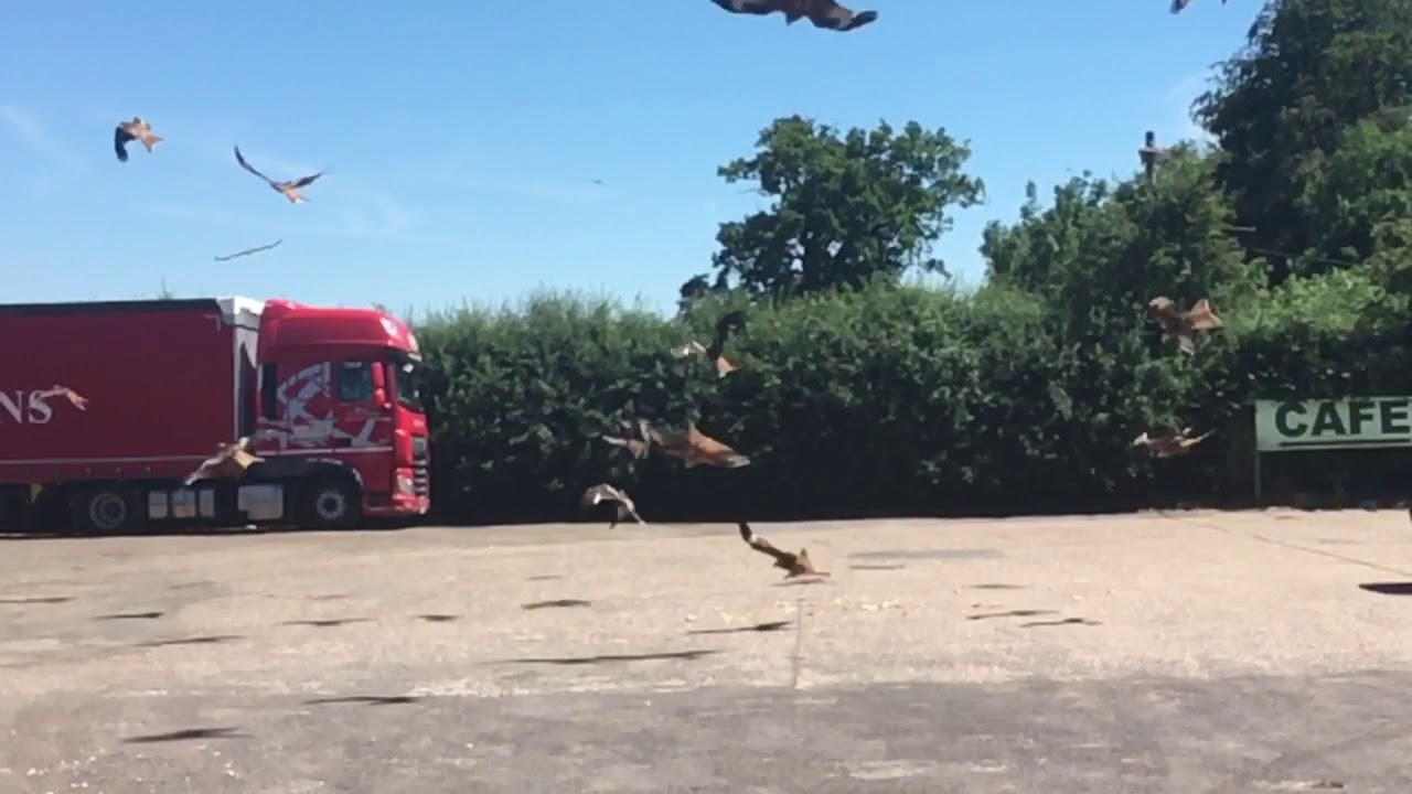 red kites in slo motion at chris cafe motel stokenchurch on 2nd july rh youtube com