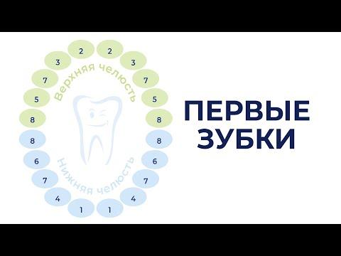 Легкое прорезывание первых зубов C Dentinale® Natura