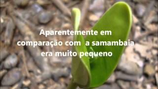 A SAMAMBAIA E O BAMBU - VÍDEO MOTIVACIONAL - VDTC comunicações