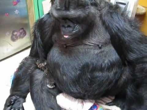 """Koko Makes New Kitten her """"Baby"""" for Now"""