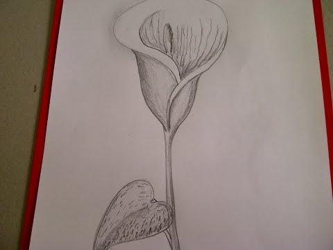 calla zeichnen blume zeichnen zeichnen lernen f r anf nger zeichnen lernen. Black Bedroom Furniture Sets. Home Design Ideas