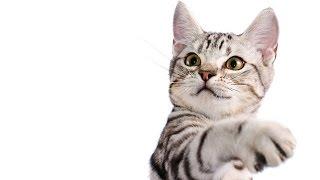 Kedi Tırmaladı Ne Yapmalıyım?