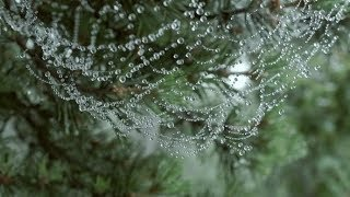 Dew on a Spider Web | Stock Footage - Videohive