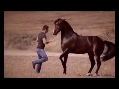 Самая дорогая лошадь