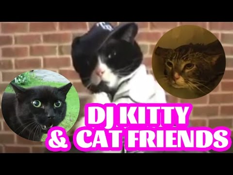 DJ Kitty & his crazy singing dancing cat friends - Hold Meow [cats original]