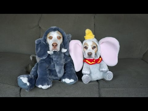 Theresa Lucas - 17 FUNNY Dog Costumes for Halloween