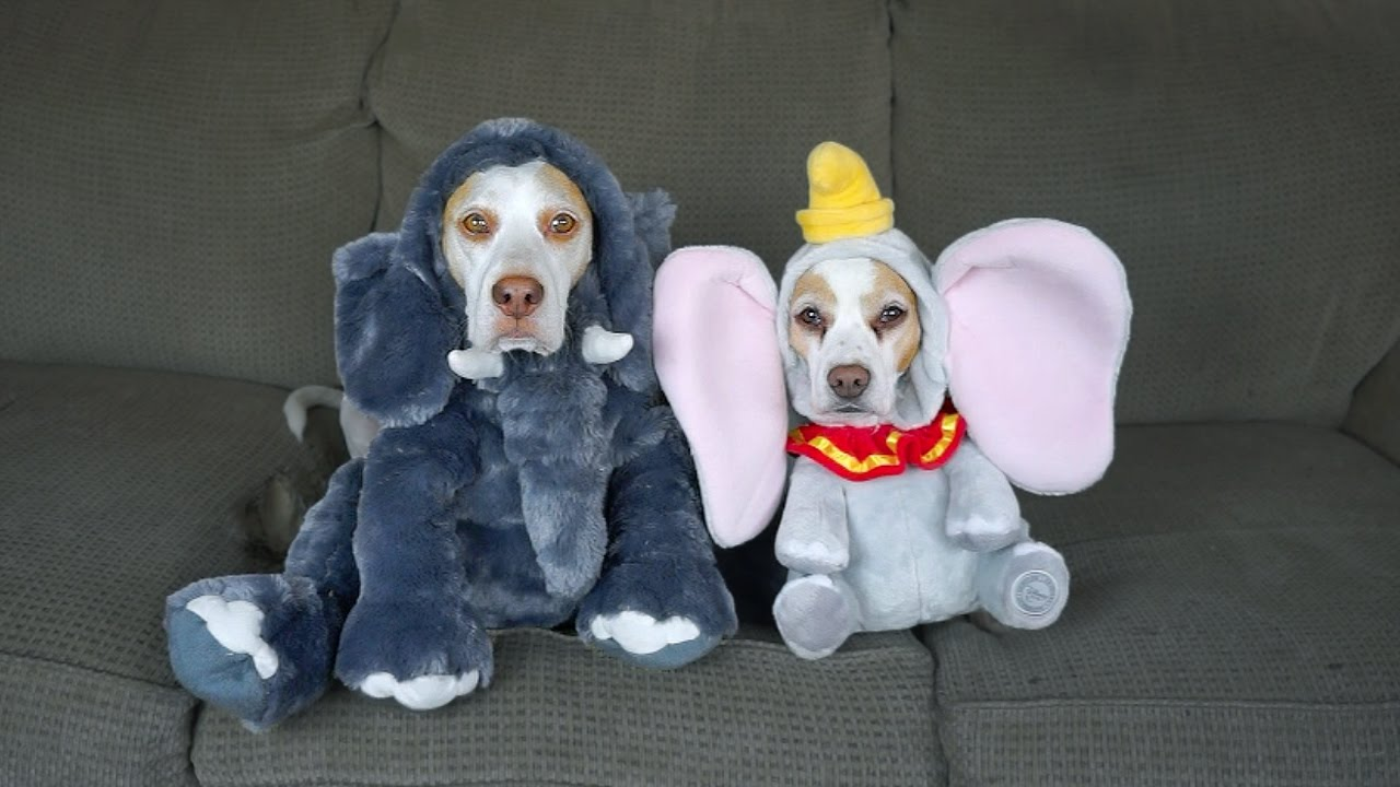 : funny dog costumes  - Germanpascual.Com