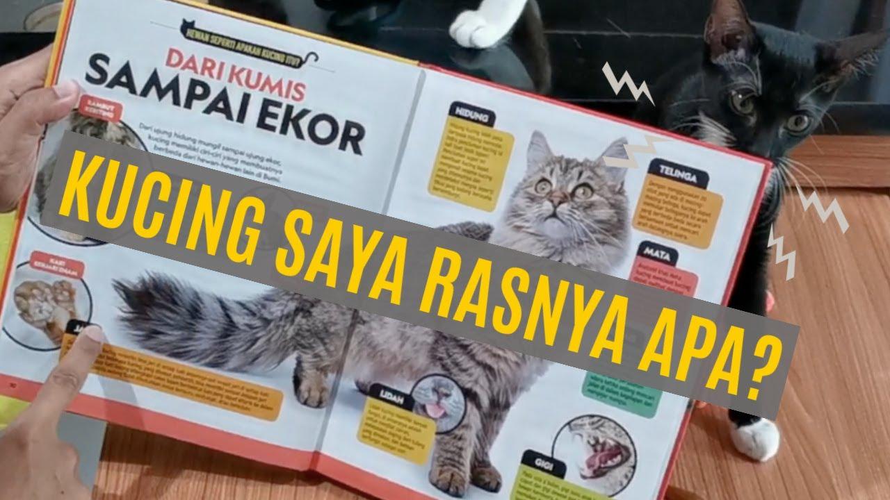 Kelebihan Minyak Kelapa Dara Untuk Kucing