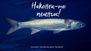 Ловля пеленгаса в Ростове-на-Дону 2020. Пляж Аврал.
