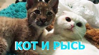 ЖИЗНЬ КОТА С РЫСЬЮ. Как кот Пусси вырастил рысь Ханну / THE LIFE OF A CAT AND A LYNX