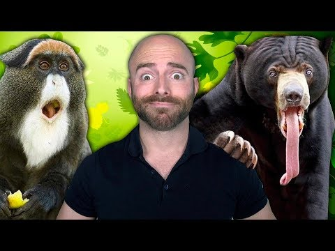 10 Weird Things Animals Do That We Can't Explain