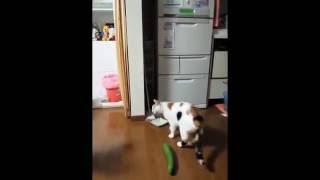 КОТЫ и ОГУРЦЫ! Новая Подборка Диких Танцев Котов