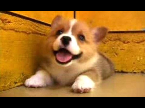 Puppies Barking - A Cute Dogs Barking Videos Compilation [CUTE]