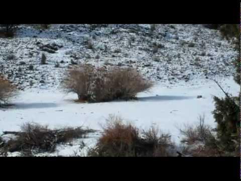 2012 Owyhee County Coyote Hunt
