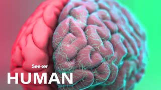 How Exactly Is the Human Brain Organized?