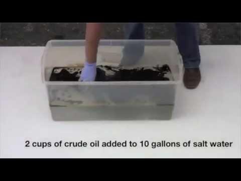 Team 9: Nanotechnology and Oil Spills
