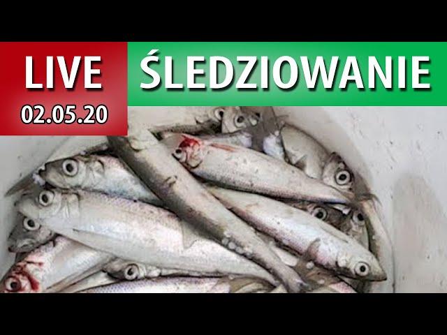 LIVE Śledzie Z Władysławowa
