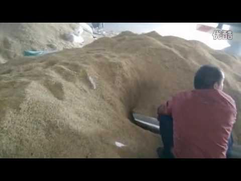 bulk dry rice transportation truck in the grain station  whatsapp:0086-13635733504