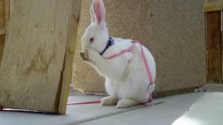 Bunny Cabbit