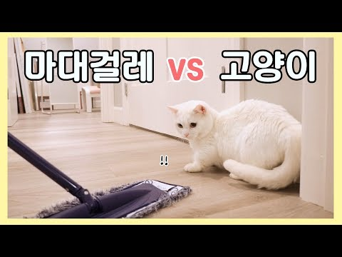 고양이 vs 마대걸레