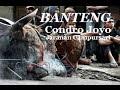 Banteng Ndadi SAMPUN SAYAH Gending Kalung Emas PegGon CONDRO JOYO