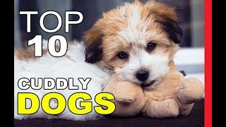 Top 10 Most Cuddly Dog Breeds