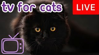 TV for Cats! Combat Boredom and Anxiety with Cat TV and Music!