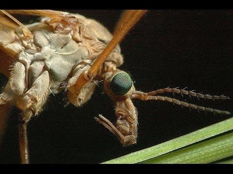 Nutzen und Schaden von Insekten. Doku