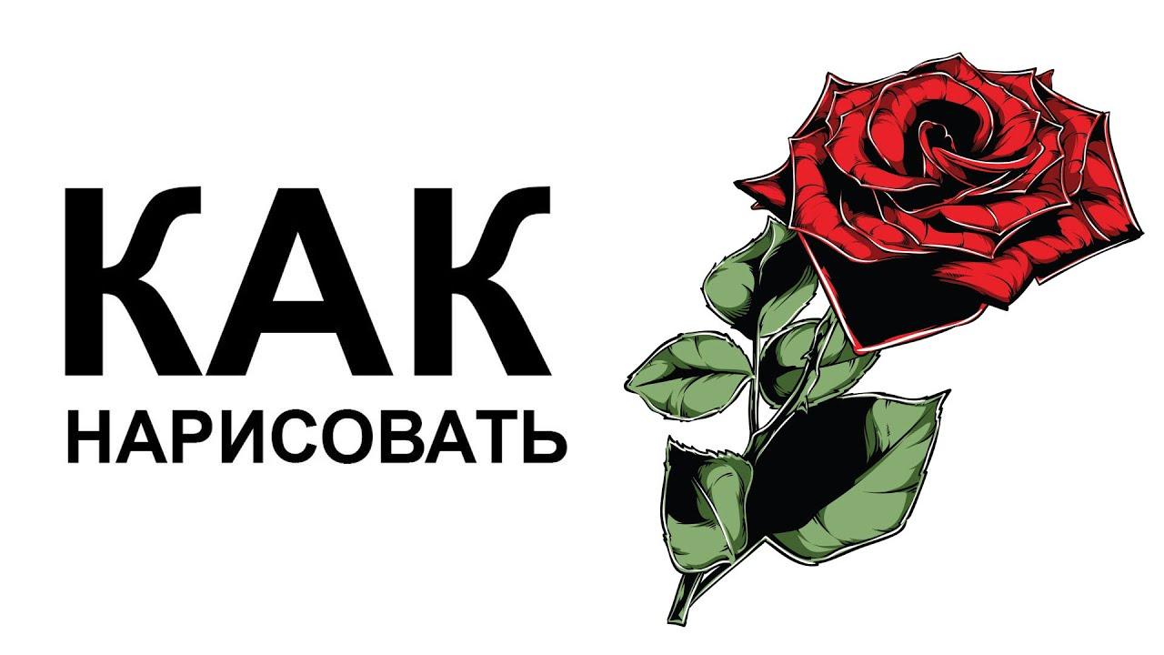 фото нарисованной розы