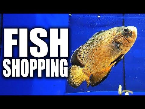 AQUARIUM FISH SHOPPING | The King of DIY