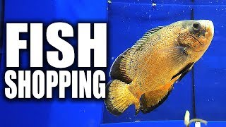 AQUARIUM FISH SHOPPING | The King of DIY