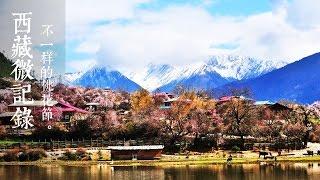 《西藏微记录》 —   不一样的桃花节 | CCTV