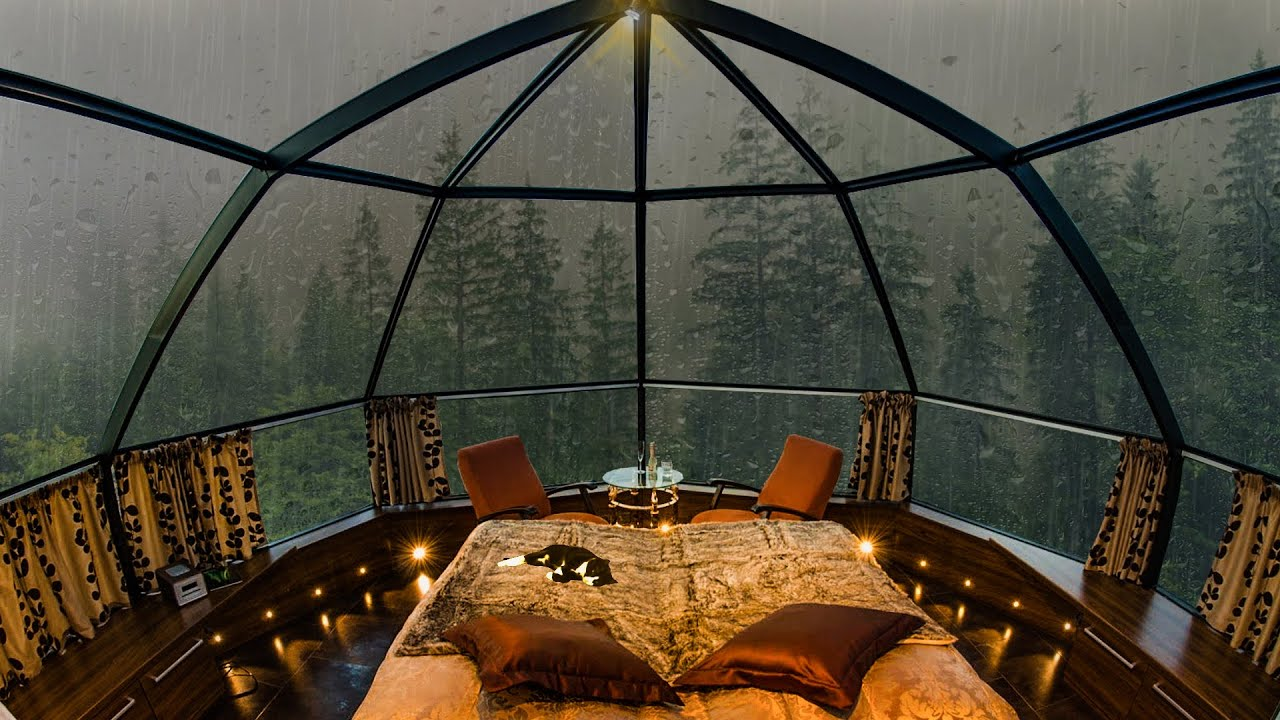 Listen to the Rain and Sleep in This Cozy Room In Tongass National Forest Was Amazing!