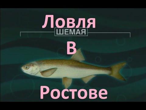 Диалоги о рыбалке -128- Ростовская область, Шемая.