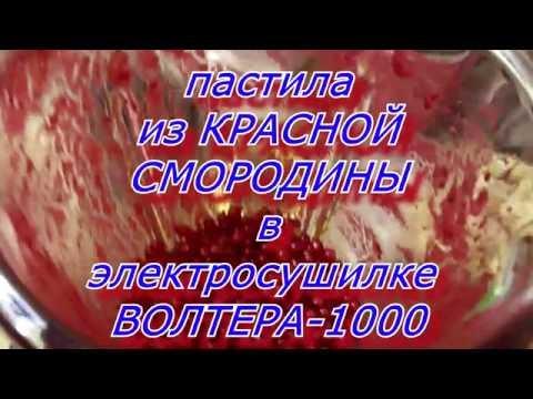Пастила из красной смородины в электросушилке ВОЛТЕРА 1000