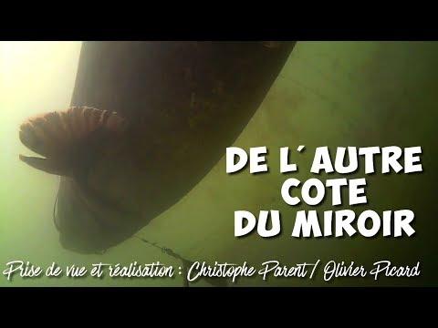 DE L'AUTRE COTE DU MIROIR [forum international de pêche carpe et silure de Montluçon 2018]