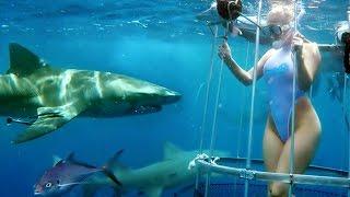 Tiburón ataca a actriz porno en plena escena XXX