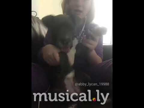 Puppy doing ju ju on that beat