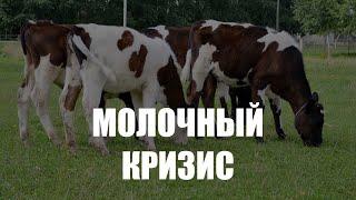 Фермеры в Славском округе жалуются на резкое снижение закупочных цен на молоко